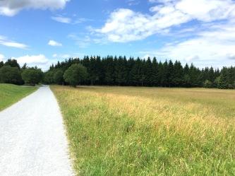 Weg Wald